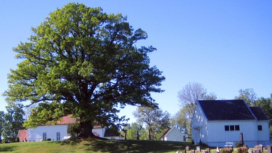 Hof kirke og bårehus med den gamle eika